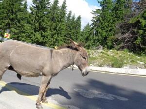 Transalpina - dla tych co kochają góry 131km bajecznych widoków